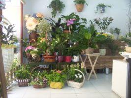 ¿QUÉ SABES DE LAS PLANTAS? (5º A)